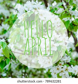 hello april text with blooming pear flowers on background
