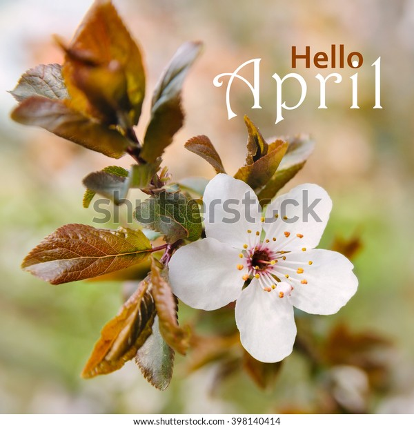 Hello April Wallpaper Spring Blooming Tree Stock Photo Edit Now