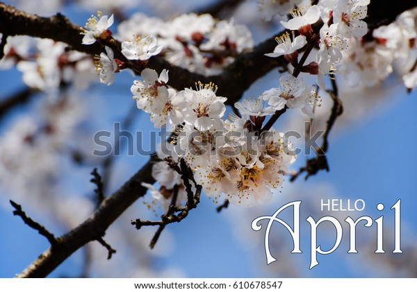 Hello April Wallpaper Spring Blooming Tree Royalty Free Stock Image