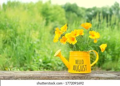Hello August. Bright flowers escholzia in yellow watering can. Eschscholzia californica flowers in garden. summer season concept