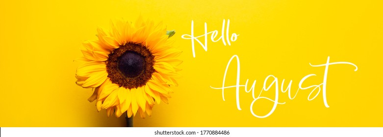 Hello August text and Yellow Sunflower Bouquet on bright Yellow Background, Autumn Concept, Top View, Space for Text, banner size