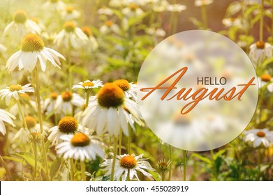 Hello August wallpaper, summer garden background with big flowers in sunshine