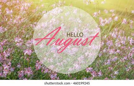 Amazing Hello August Wallpaper, Summer Garden Background With Pink Flowers In  Sunshine