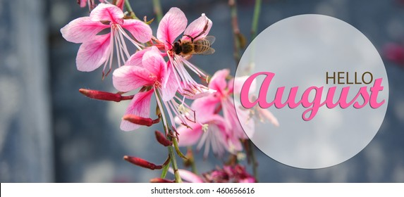 Hello August Wallpaper, Summer Garden Background With Pink Flowers