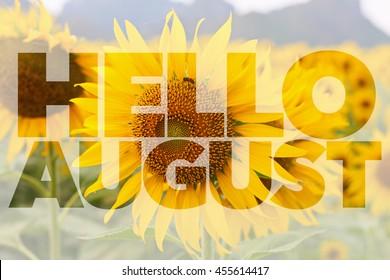 Hello AUGUST word on sunflower background