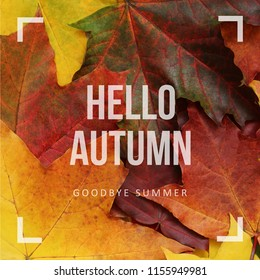 Hello autumn, goodbye summer greeting text on colorful fall leaves background.