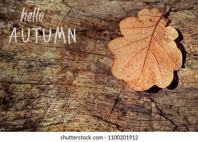 Hello autumn lettering card. autumn  leaf oak lying on old stump. wood texture, close up. The Season Of Autumn. toning, soft focus