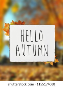 Hello autumn text on white plate board banner fall leaves blur background