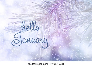 HELLO JANUARY greeting card. Winter holidays concept.  Fir branches in the snow. Great season texture with winter mood.