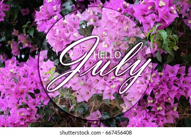 Hello July Wallpaper With Purple Pink Flowers Background
