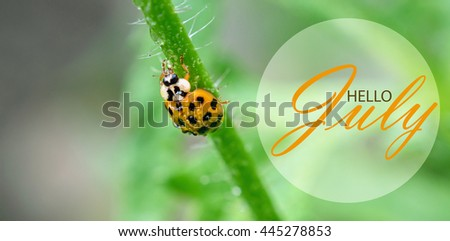 Hello July Wallpaper Summer Garden Background Text With Ladybug