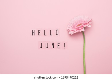 Hello June text and pink gerbera flower on pink background. Hello June concept.