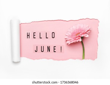 Hello June text and pink gerbera flower on pink background. Paper hole with torn edges.