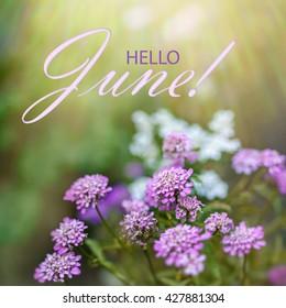 Hello June Wallpaper Summer Garden Background Purple Flowers