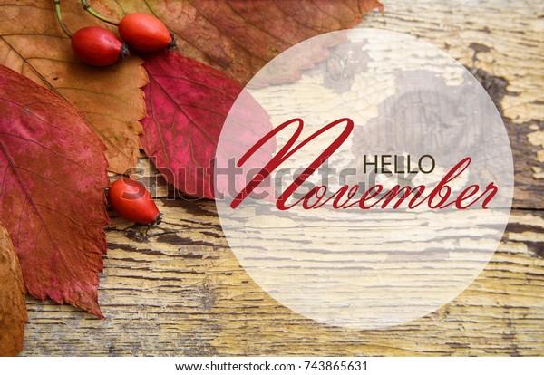 Hello November Wallpaper Autumn Leaves Rose Stock Photo