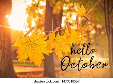 Hello october. autumn nature background. garland of yellow maple leaves in park. beautiful autumnal landscape, golden fall season.