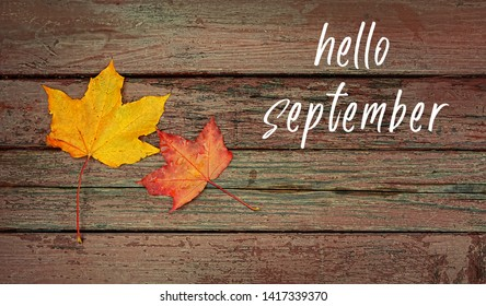 Hello September. autumn maple leaves on wooden rustic background. Autumn scene with colorful maple leaf. Fall season. Top view