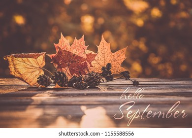 Hello September. beautiful autumn composition. autumn leaves and cones on natural background. concept of fall season. Autumn mood background.