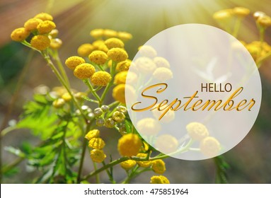 Hello September Wallpaper, Autumn Background With Yellow Flowers