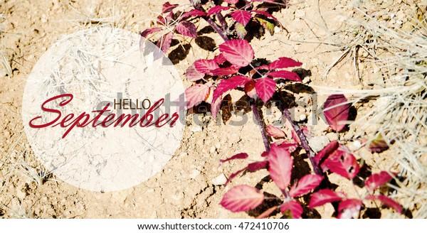 Foto De Stock Sobre Hello September Wallpaper Autumn