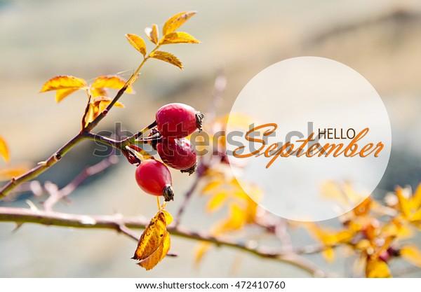 Hello September Wallpaper Autumn Background Yellow Royalty