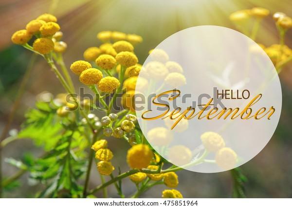 Hello September Wallpaper Autumn Background Yellow Stock