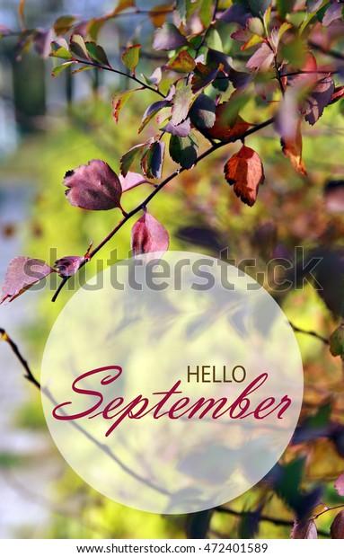 Hello September Wallpaper Autumn Garden Background Stock