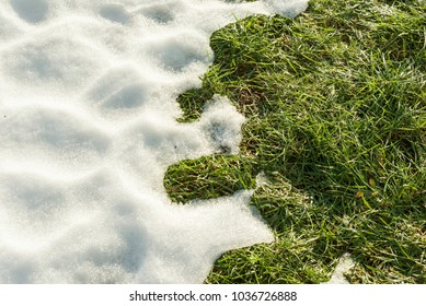 Hello spring, Melting snow on green grass close up - between winter and spring concept background