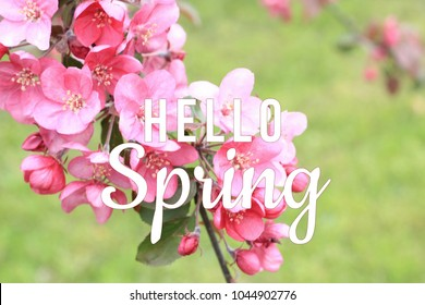 Hello spring text on blooming tree branch background. March, April, May,  spring equinox concept.