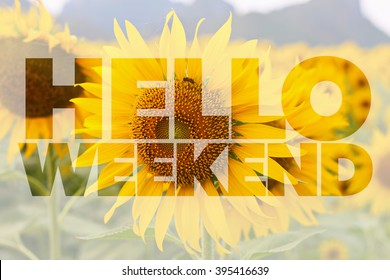 Hello Weekend word on sunflower background