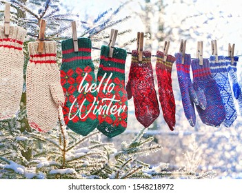 Hello Winter. winter background. colorful wool mittens and snowy fir branch. Winter season symbol. knitted rustic mittens.