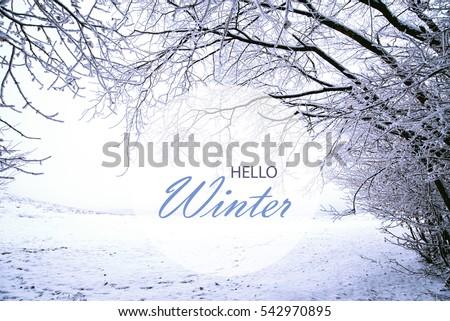 Hello Winter Wallpaper Landscape With Frozen Forest