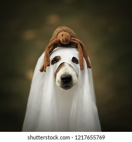 Helloween dog. Dog sit disguised as ghost