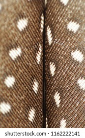 Helmeted guineafowl feather