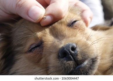 Help clean ticks from dogs.