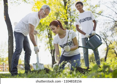 Help environment. Low angle of three volunteers planting tree and staring down