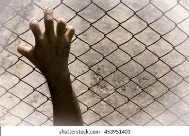 Help me,please.I have been detained and abused,Right hand put on the chain link fence image.