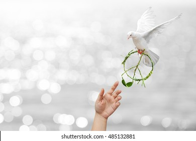 helping hand desire to pacification sign shape and dove flying on white bokeh for freedom  concept in Clipping path for international day of peace 2017