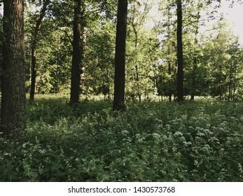 Helsinki, Finland. June 21 2019 - Beautiful summer scenery of midsummer day(Juhannus) Eve in Finland