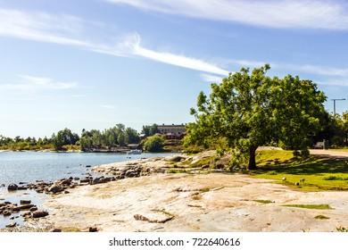 HELSINKI : Lonely tree in Kaivopuisto Park on sunny summer day in Helsinki