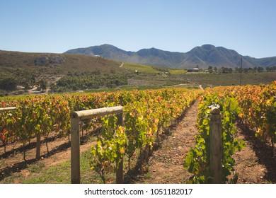 Hemel en Aarde Wine Valley landscape in daylight