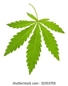 hemp leaf isolated on white background