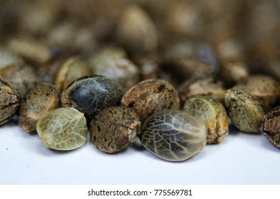 Hemp marijuana seeds macro view