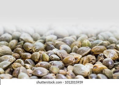 Hemp seeds. Close up. Space for text.