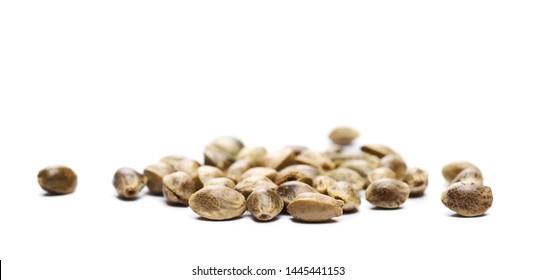 Hemp seeds macro isolated on white background