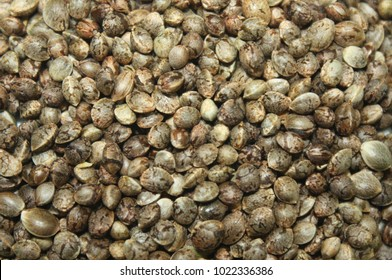 Hemp seeds marijuana grain texture background. Marijuana seed photo.