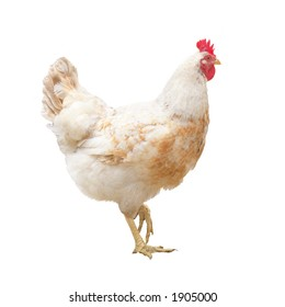 hen, isolated on white