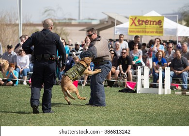 """Henderson, Nevada - March 5th, 2016: At the annual Bark in the Park event, a police dog engages a """"suspect"""" during a working dog demonstration."""