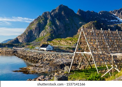 Henningsvaer village, Lofoten Islands, Norway, Traditional Drying cod, drying on wooden racks in Lofoten Islands