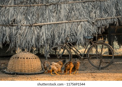 hens and hut, Hens near the hut, hens, hen hut, old bicycle